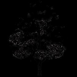 Tattoo Baum 9
