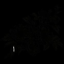 Tätowierung Blume 7