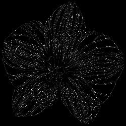 Vorlage Blume 13