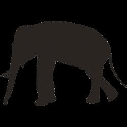 Motiv Elefant 29
