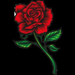 Rote Rose mit Stil