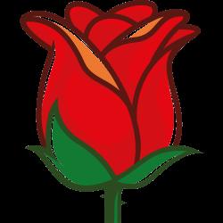 Fast geschlossene Rosenblüte