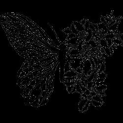 Schmetterling und Orchideen